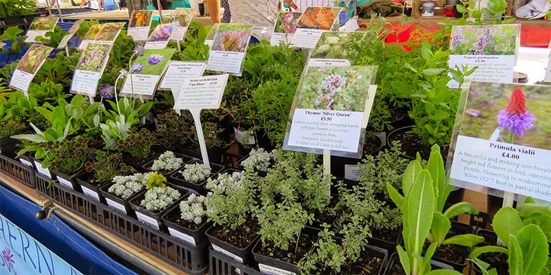 Northern Ark Nursery at Kelso Farmers' Market July