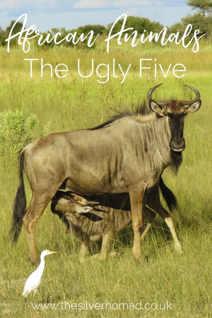 African Animals the ugly five