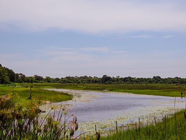 Okavango River Lodge, Maun
