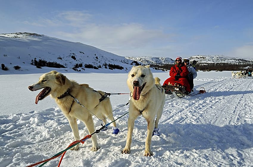 Kathryn from Travels with Kat dog-sledging in Norway on the snow