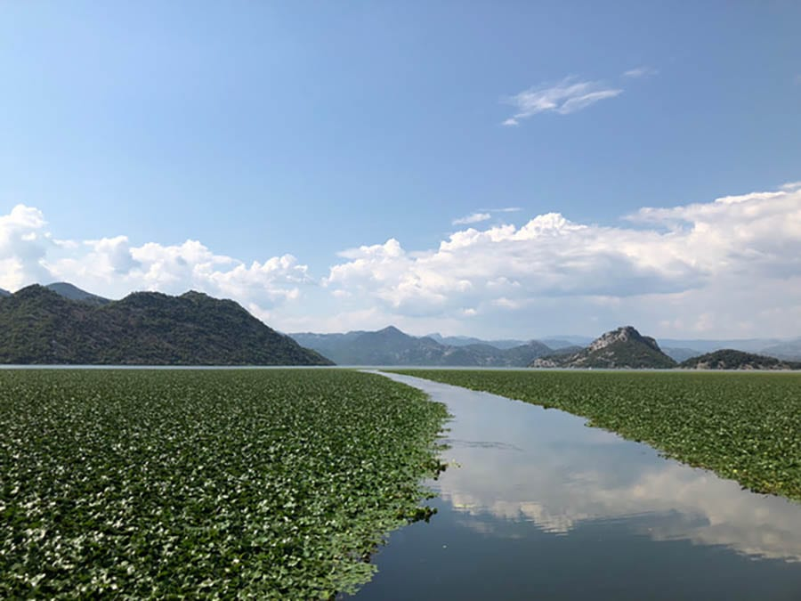 Lake Skadar, Montenegro, a tranquil hidden gem - with greenery covering the sides of the lake and the hills in the background